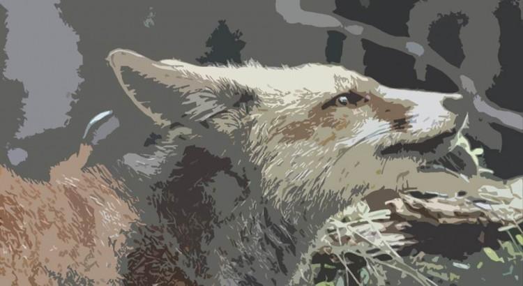 foto zorro retocada